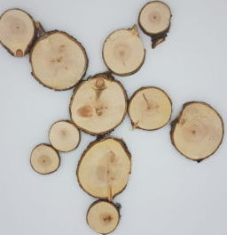Zirbenholz Baumscheiben