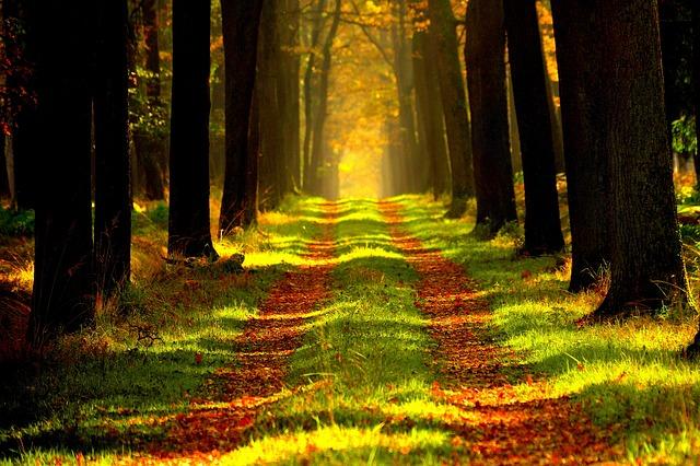 Geruch von Zirbenholz intensivieren
